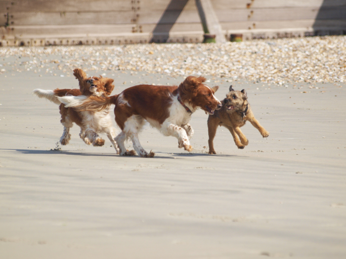 Tink , Marley & Bede having a ball