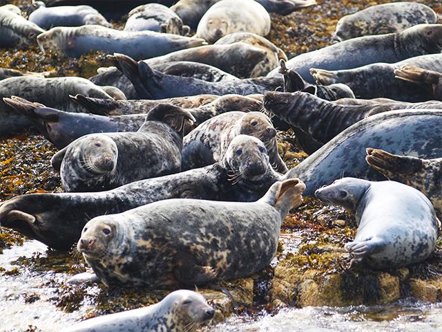 Seals-2015