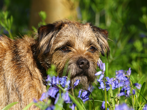 BlueBell-Blog-Bede