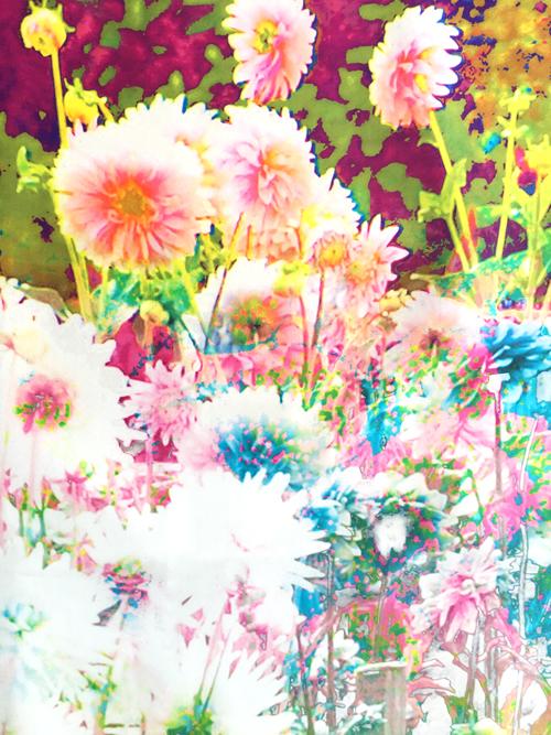 Spring-FLora-Zoom-