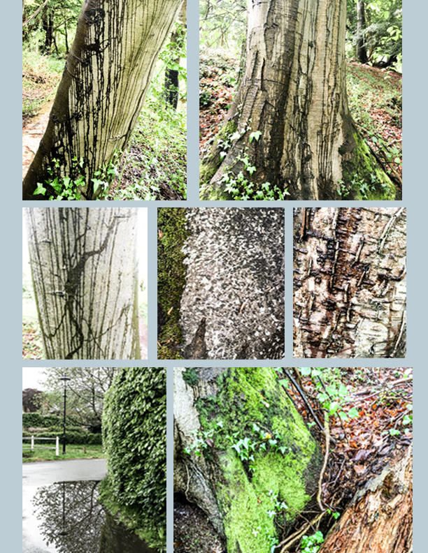 Wet-Woodland-Walk-Blog-